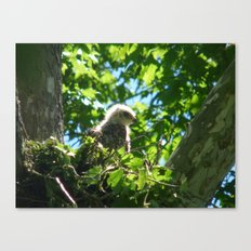 baby hawk Canvas Print