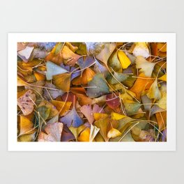 Fallen Ginkgo Leaves Art Print