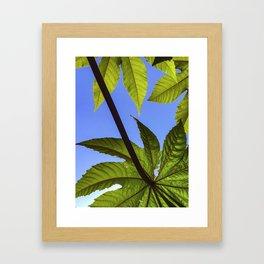 Castor Bean Framed Art Print