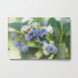 Perfect Pair at the Blueberry Patch Metal Print