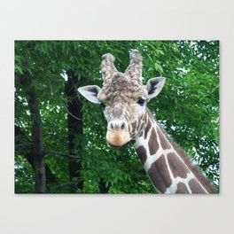 Whatcha Looking At? Canvas Print