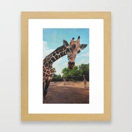 What's Occurring? - Giraffe Framed Art Print