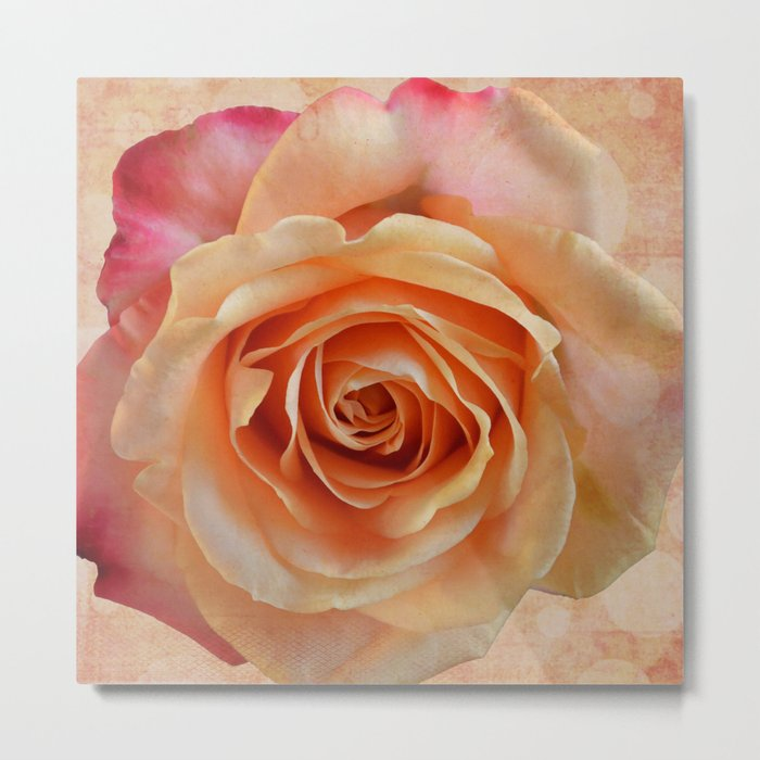 Artistic gorgeous rose with a textured background Metal Print