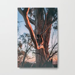 Koala at Sunset Metal Print