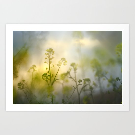 forest of flowers at sunset Art Print