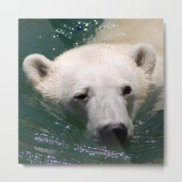 Polar bear's delight Metal Print