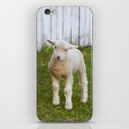 3 Little Lambs iPhone Skin