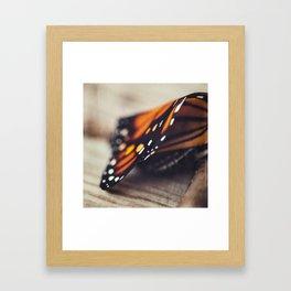 Monarch Study #2 Framed Art Print