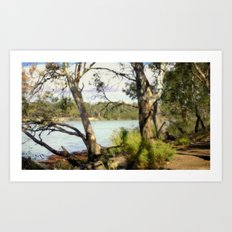 Australian Native Flora Art Print
