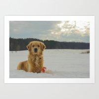 Snowy Golden Art Print