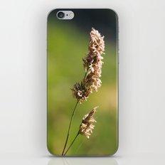 Mountain Grass iPhone Skin