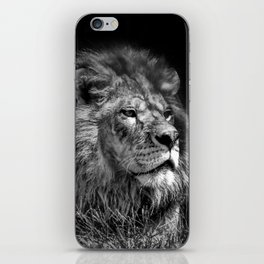 Proud Young Lion iPhone Skin