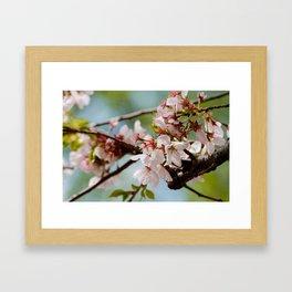 Bloom Bloom Bloom Framed Art Print