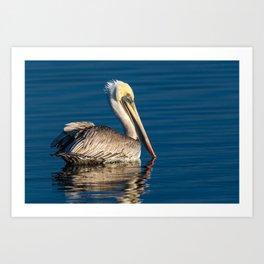 Brown Pelican - Study 6 Art Print