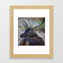 Cervo Sardo Framed Art Print