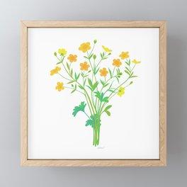 Spring Buttercups Wildflower Illustration Framed Mini Art Print