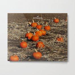 Pumpkin Patch Metal Print