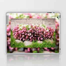 pink Begonia semperflorens clumps Laptop & iPad Skin