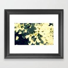 Delicate Petals Framed Art Print