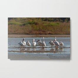 The Birds of Cutler Bay Wetlands Metal Print