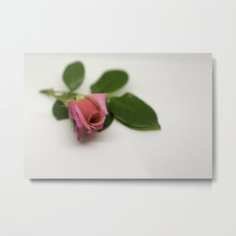 Solitairy Rose Metal Print
