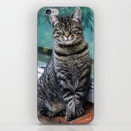 Cat posing for the camera. iPhone Skin