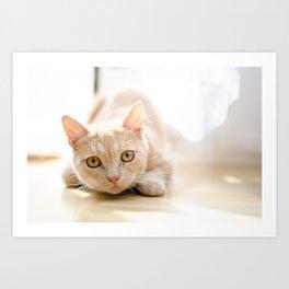 The pouncing kitty Art Print