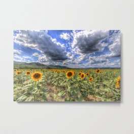 Sunflower Summer Field Metal Print