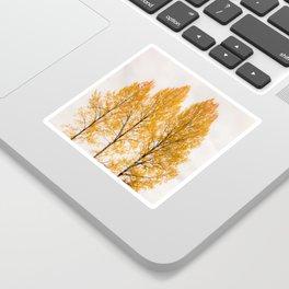 Aspen Trees #decor #buyart #society6 Sticker