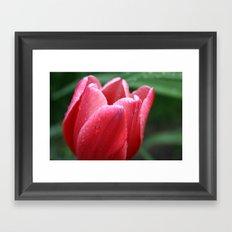 Tulip in red Framed Art Print