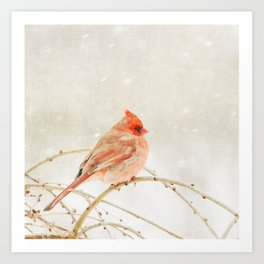 Painterly Cardinal Art Print