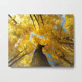 "autumn leaves photo, yellow blue, fall tree, warm tones ""heights of autumn"" Metal Print"