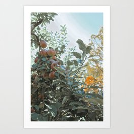 Apple Fields II Art Print
