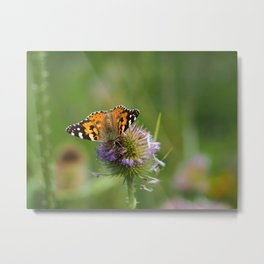Painted Lady on a Teasel Metal Print