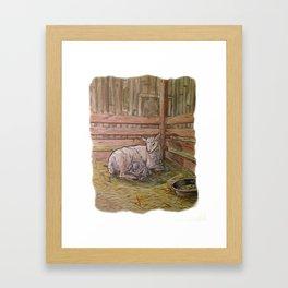 Popcorn the Lamb 1 Framed Art Print