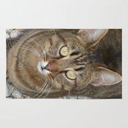 Cute Tabby Cat Portrait  Rug