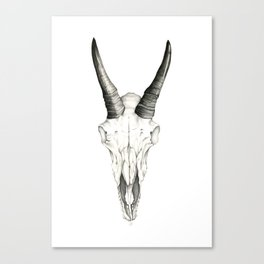 Mountain Goat Skull Canvas Print