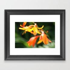 Orange Bells Framed Art Print