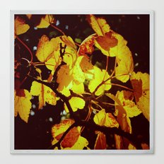 Autumnal#6 Canvas Print