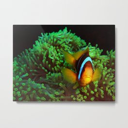 Anemone Fish in Green Anemone Metal Print