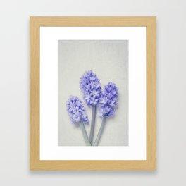 Bright Lilac Hyacinths Framed Art Print