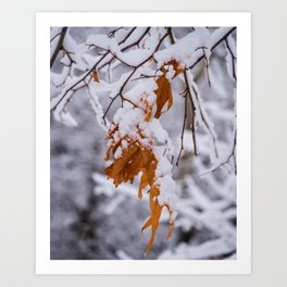Oak Leaf in the Snow Nature Photography Art Print