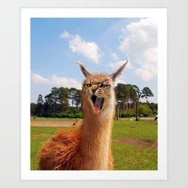 Cama Cat Llama Hybrid Art Print