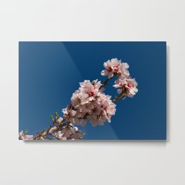 Spring Cherry Tree Blossoms - I Metal Print