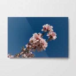 Spring Cherry Tree Blossoms - I Metal Print