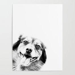 Dog peeking Black & White Poster