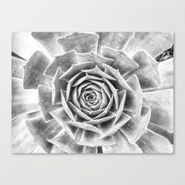Succulent V Canvas Print
