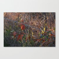the wire Canvas Prints featuring Wire by Adrienne Heinig
