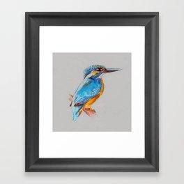 Kingfisher 5 Framed Art Print