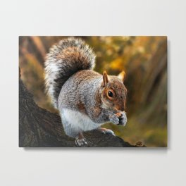 Squirrel nutkin Metal Print